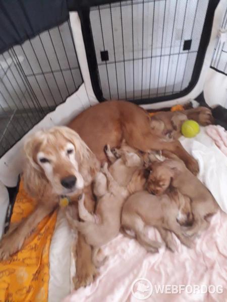 kojení s matkou