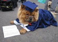 Hlídání , výcvik psů