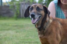 REX - Barvář x kříženec - kastrovaný psík, 8 let
