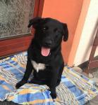 BERTÍK - kříženec 12 kg - pes 1 rok.