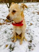 BENÍK - kříženec 7 kg - kastrovaný pes 6 let.