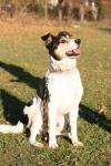 MAT - Kříženec - pes