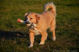 KUBÍČEK - Kříženec - pes
