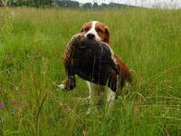 Mražená zvěř na výcvik loveckých psů