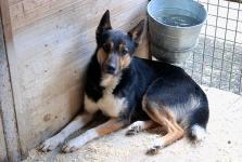 BINGO - Kříženec nešťastný - pes 2 roky