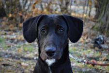 TANGO - Kříženec - pes štěně