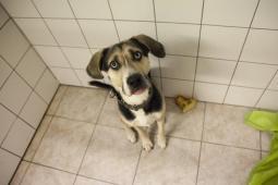PUSH - Kříženec - pes 11 měsíců
