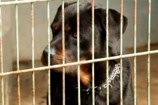 DIOR - Rotvajler - pes 3 roky.hand