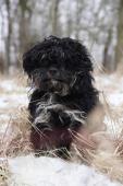 ROMÁNEK - Pudl x kříženec 12 kg - pes 3 roky.