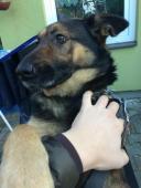 Maxina k adopci (5 let;30 kg)