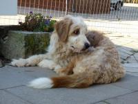 BOB - Kříženec - pes 2 roky