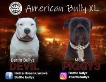 ABKC Top Am Bully XL