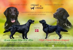Štěňátka FLAT COATED RETRIEVERA s PP