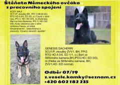 Štěňata  NO s PP
