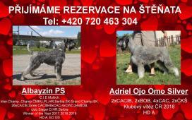 Knírač velký PEPŘ a Sul štěn.s PP