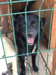RONY - Kříženec - pes štěně