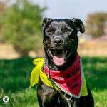 BAK - Kříženec - pes 1 rok