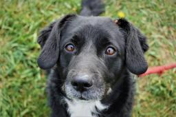 MORIS - Kříženec - pes