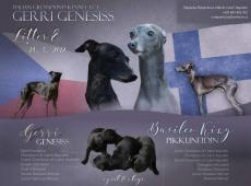 CH.st.Gerri Genesiss IG
