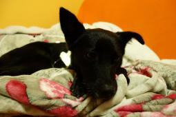 KRISTIAN - Kříženec menší - pes 2 roky