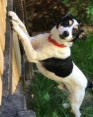 FILÍPEK - kříženec 9 kg - kastrovaný pes 5 let.