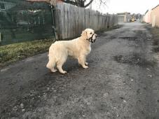Maminka na procházce