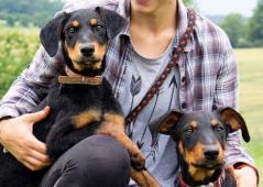 KESIE a KERIE - Dobrman x kříženec - štěně 6 měsíc