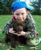 Labrador - čokoládová štěňata s PP