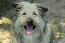 BENNY - Tibetský teriér x 14 kg - pes 6 let