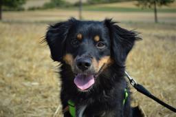 AXL - Kříženec - štěně pes