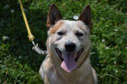 SKYPI - Honácký pes x - pes 2 roky