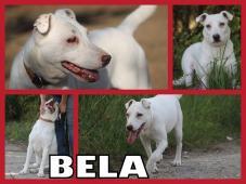 BELA hľadá domov