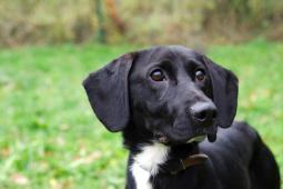 ALEX - kříženec střední velikosti - pes 6-7 let