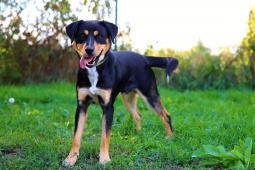SPIRIT - kříženec 20 kg - pes 2 roky.