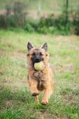 RENDY - kříženec - štěně, pes 6 měsíců.