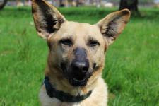 RIČI - kříženec - pes 4 roky