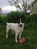 LUISA - kříženec - fena 2 roky.