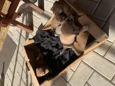 Darujem psíkov