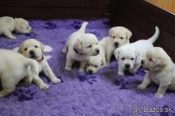 Labrador - šteniatka s preukazom pôvodu s PP