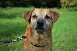 FANDA - Kříženec - pes