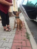 Denny k adopci (1é měsíců, 20 kilo)