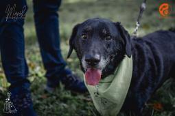 MATÝSEK - kříženec 18 kg - pes 13 let.