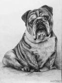 Kresby portretu