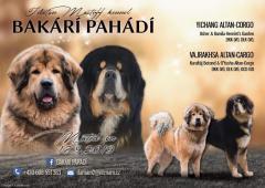 Štěňátka Tibetské dogy s PP