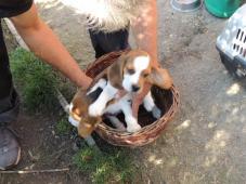 Prodej štěněte