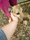LUKÁŠEK - Kříženec malý - pes do 10kg