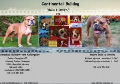 Kontinentální buldok-Continental Bulldog s PP FCI