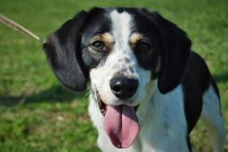 OLAF - pes štěně 7 měsíců