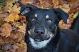 ZERO - Kříženec - štěně pes