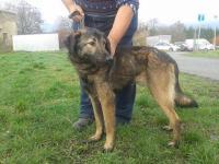 BENNY - Německý ovčák x - pes 1 rok
